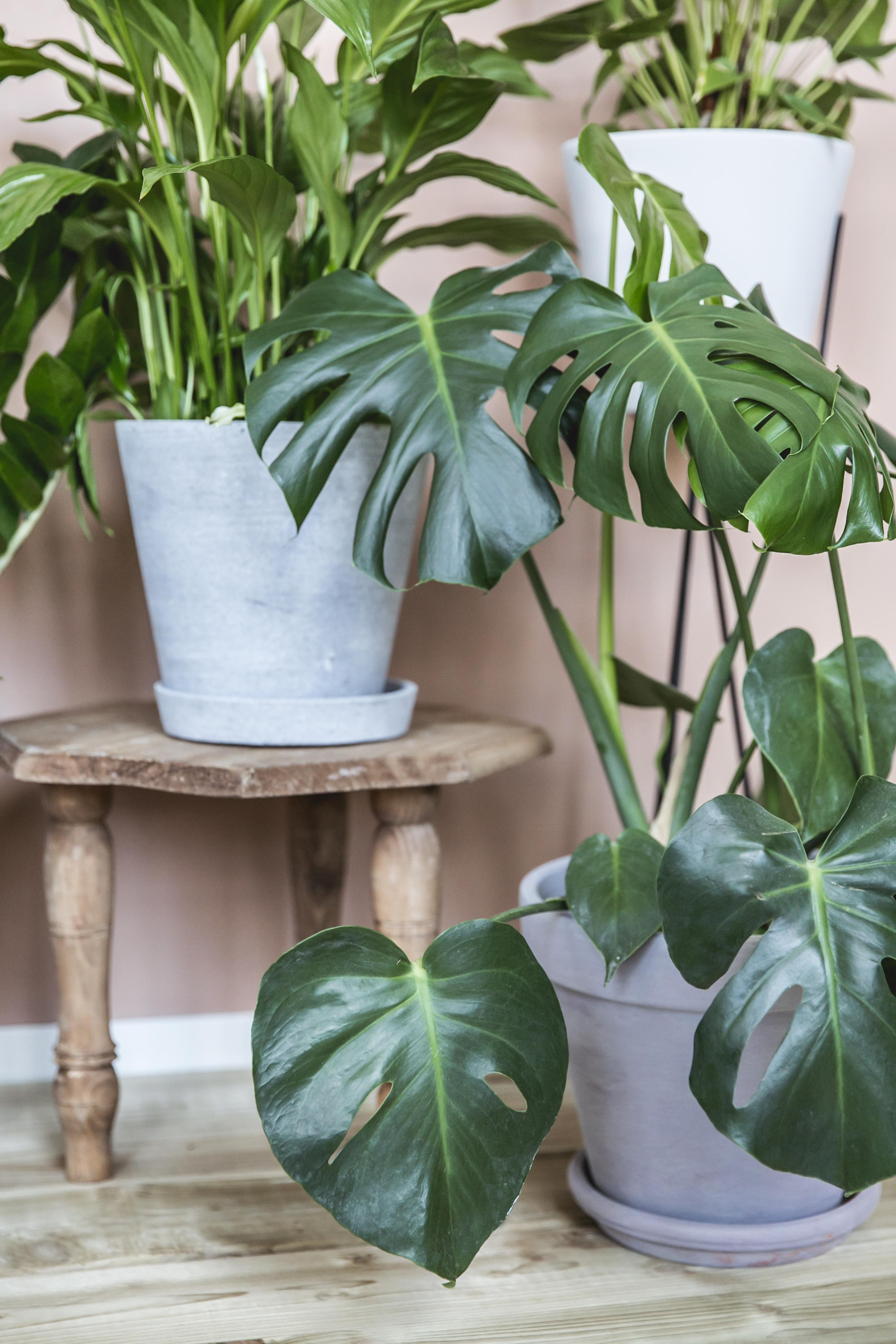 Ein Kompliment für Ihre Pflanzen