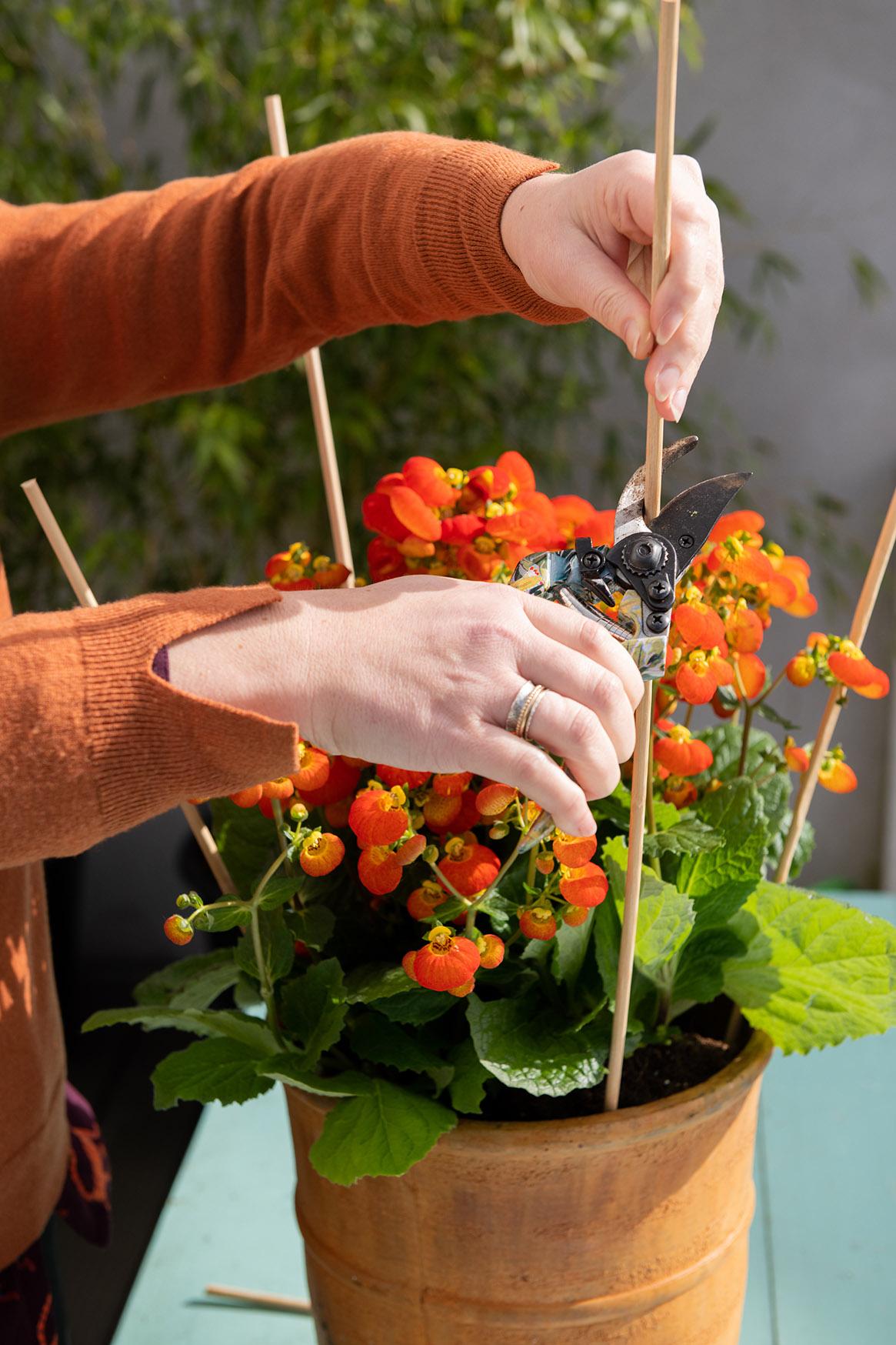 Einpacken folie blumentopf in Blumentopf in