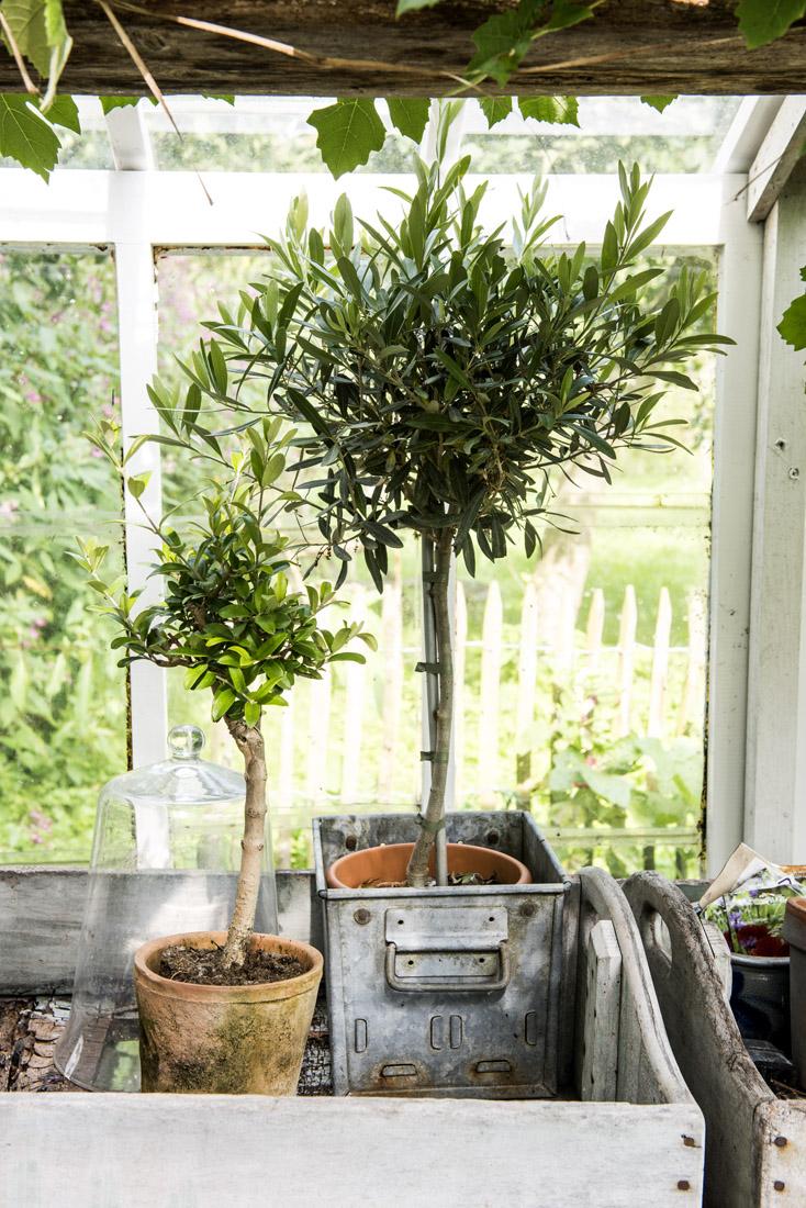 Die Richtige Vorbereitung Pflanzen Winterfest Machen Pflanzenfreude