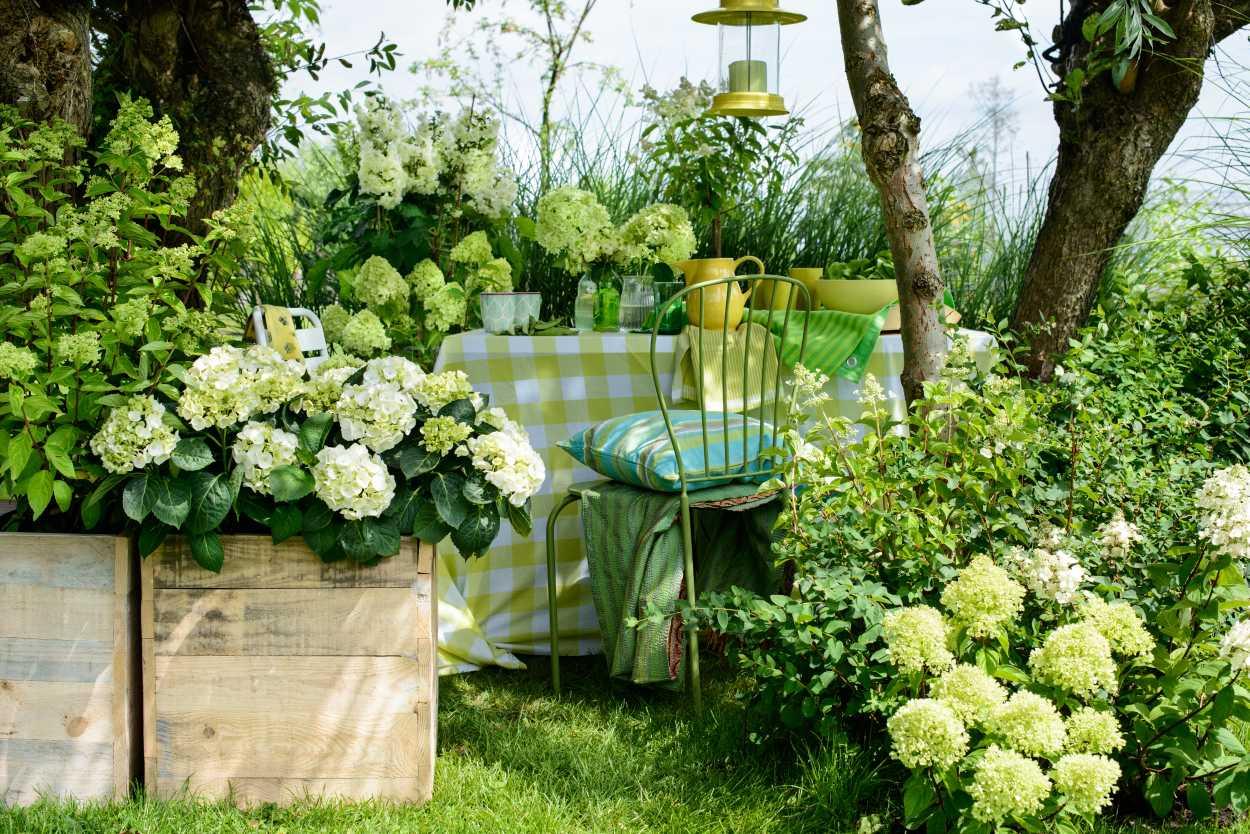 hortensien weis im garten – jilabainfosys, Gartengestaltung