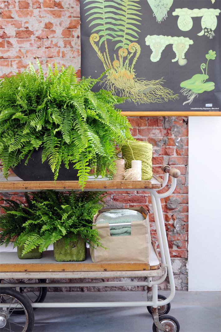 Prominente pflanzenwelt pflanzenfreude for Stephanotis exterieur