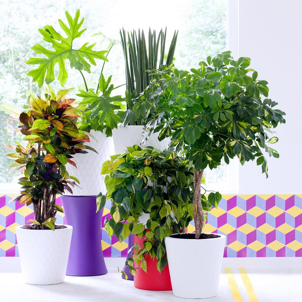 Pflegeleichte m nnerpflanzen sind die zimmerpflanzen des - Zimmerpflanzen liste ...