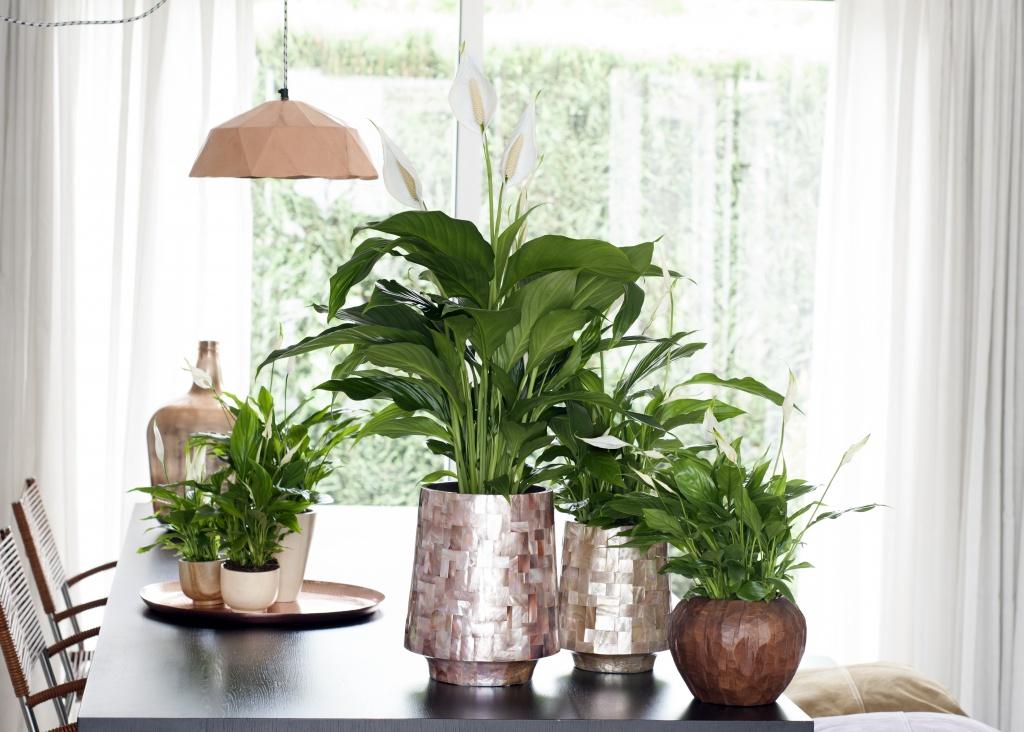 das einblatt von schlaff zu stolz in nur einer stunde pflanzenfreude. Black Bedroom Furniture Sets. Home Design Ideas
