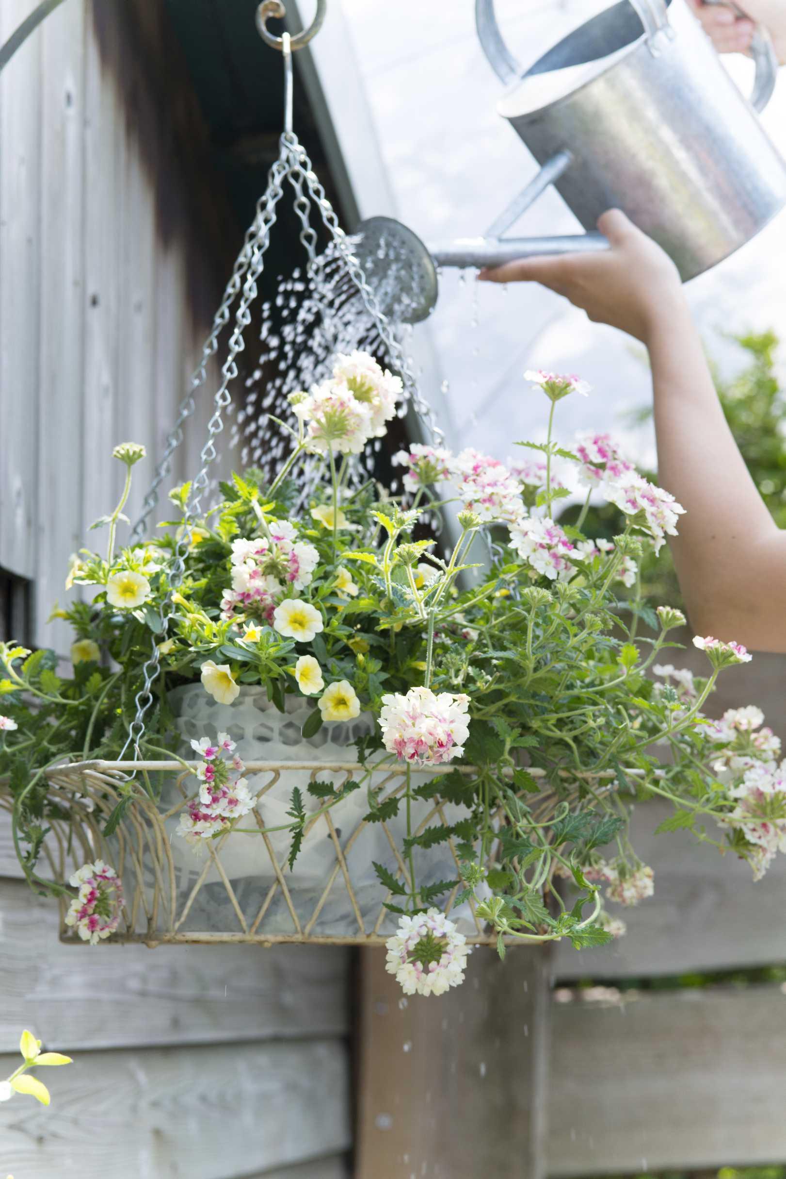 Sommertipps f r durstige gartenpflanzen pflanzenfreude - Hangende zimmerpflanzen ...