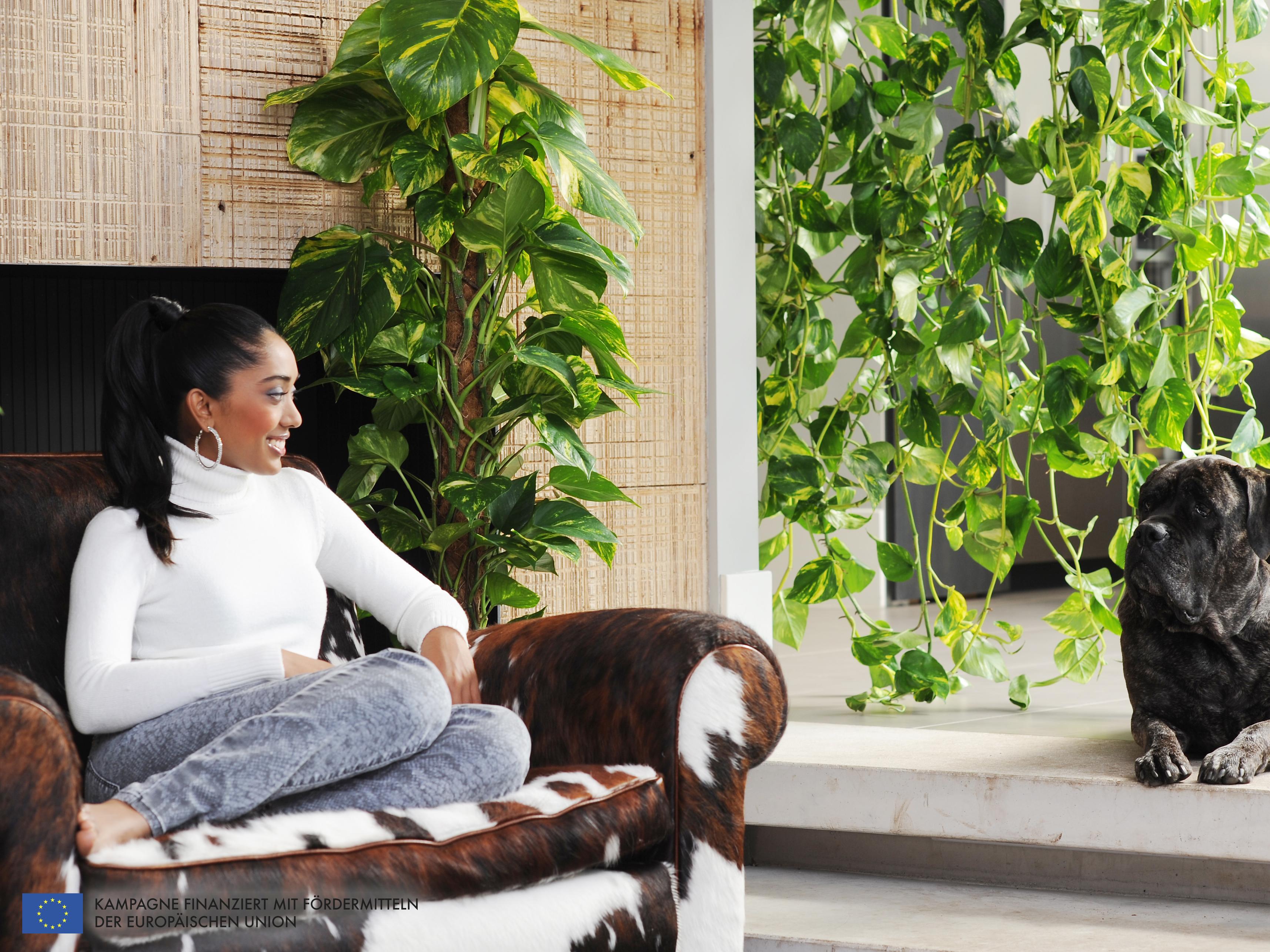die efeutute ist die zimmerpflanze des monats februar pflanzenfreude. Black Bedroom Furniture Sets. Home Design Ideas