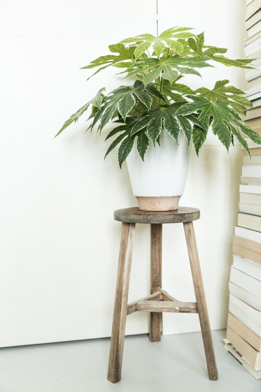 der richtige topf f r ihre pflanze pflanzenfreude. Black Bedroom Furniture Sets. Home Design Ideas