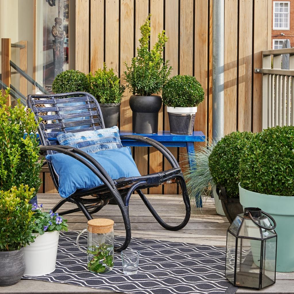 der buchsbaum klassische sch nheit im garten pflanzenfreude. Black Bedroom Furniture Sets. Home Design Ideas