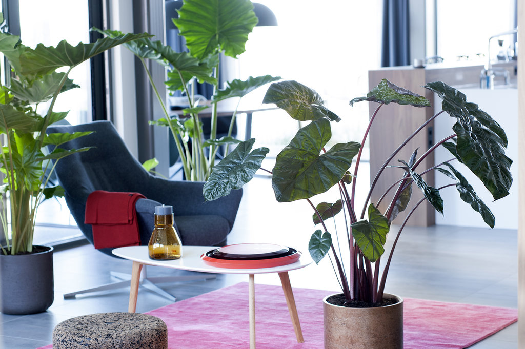 gewinnspiel zimmerpflanze des monats september 2017 pflanzenfreude. Black Bedroom Furniture Sets. Home Design Ideas