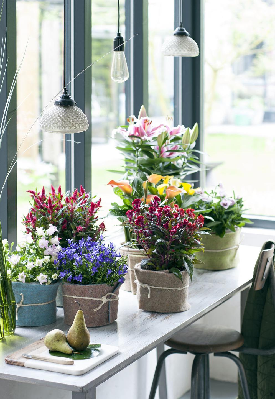 Gewinnspiel zimmerpflanze des monats mai pflanzenfreude - Bambus zimmerpflanze pflege ...