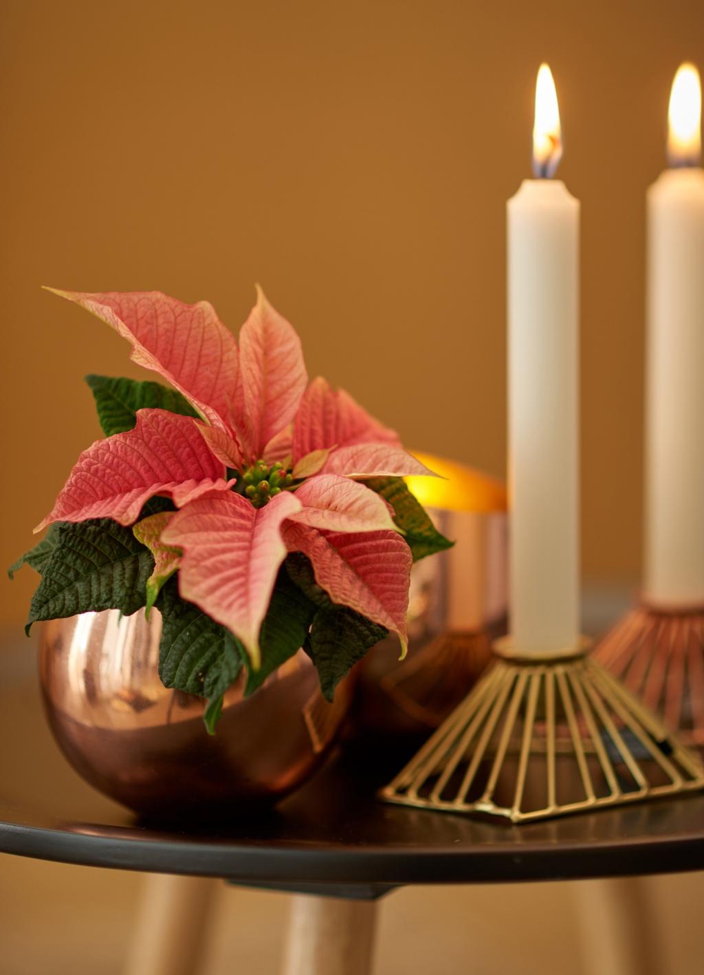 weihnachtssterne zum fest sind ihnen zu langweilig nicht. Black Bedroom Furniture Sets. Home Design Ideas