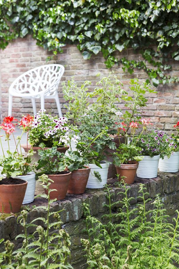 jetzt pflanzen einj hrige sommerbl her pflanzenfreude. Black Bedroom Furniture Sets. Home Design Ideas