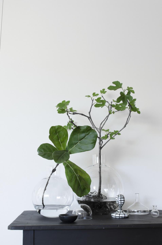die vor und nachteile von pflanzen ohne erde pflanzenfreude. Black Bedroom Furniture Sets. Home Design Ideas
