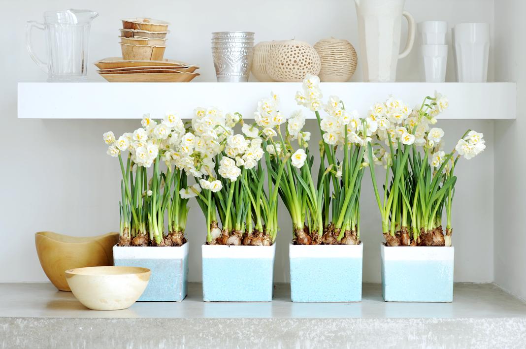 f nf pflegetipps f r ihre zwiebelpflanzen im topf pflanzenfreude. Black Bedroom Furniture Sets. Home Design Ideas