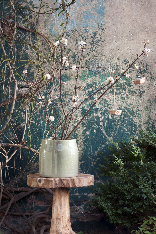 schneeball pflanzenfreude. Black Bedroom Furniture Sets. Home Design Ideas