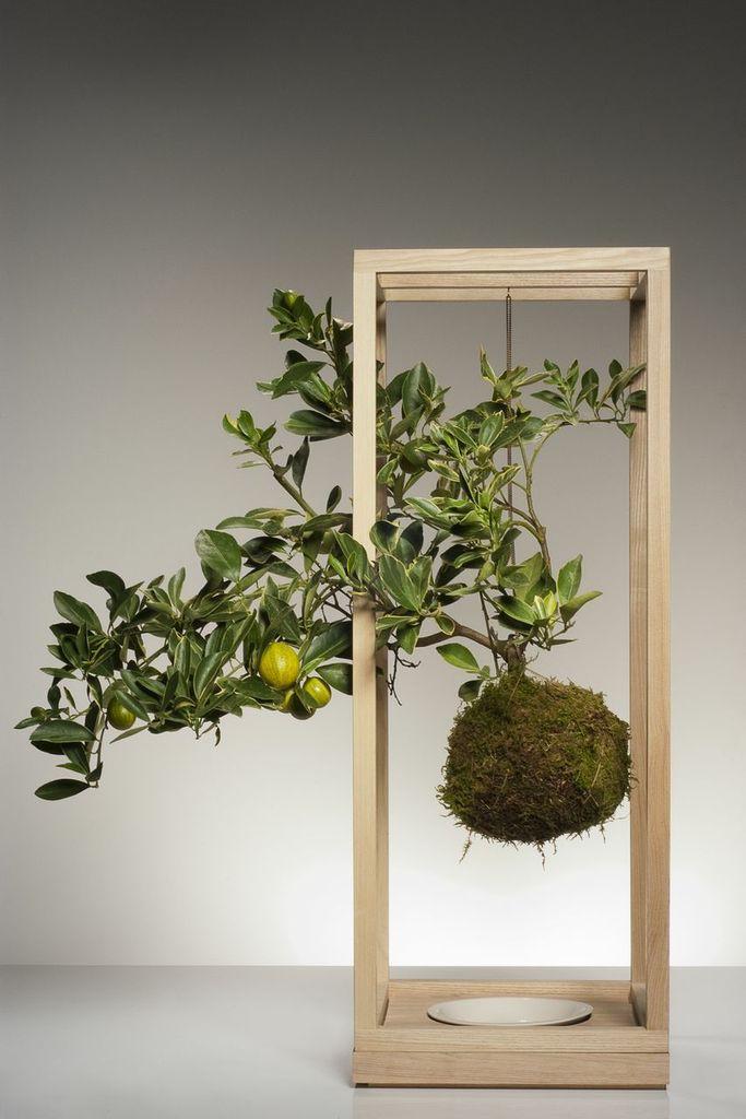 kokedama schwebende pflanzen pflanzenfreude. Black Bedroom Furniture Sets. Home Design Ideas