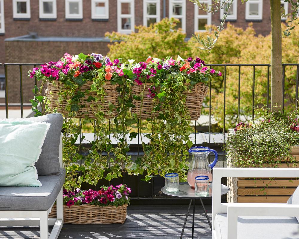 petunie pflanzenfreude. Black Bedroom Furniture Sets. Home Design Ideas