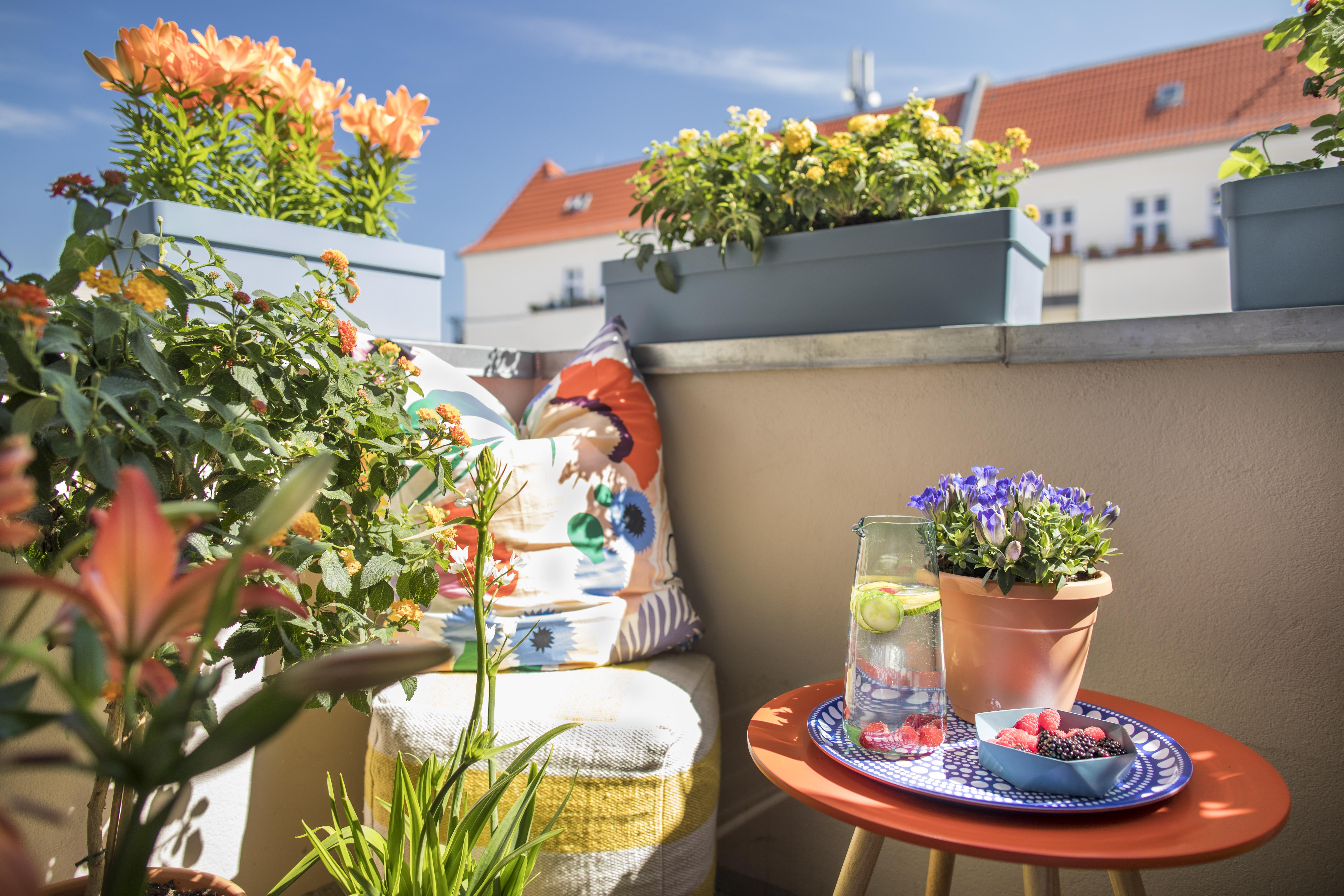 Verwandeln Sie Ihren Balkon In Eine Grune Office Oase Pflanzenfreude