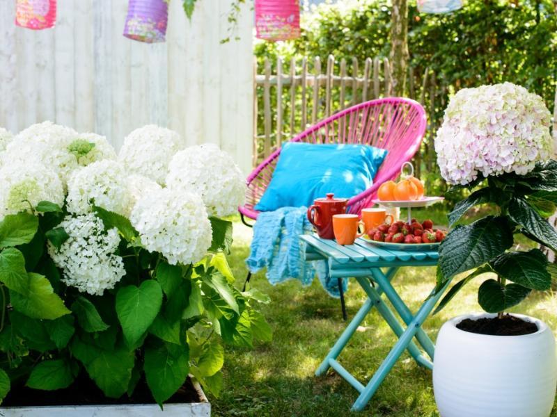 Outdoor Oase mit der Hortensie - Pflanzenfreude.de