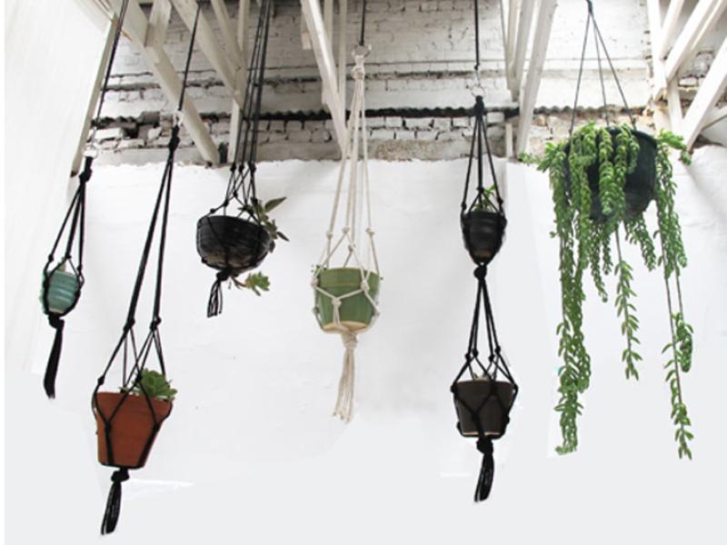 selbstmach und geschenk tipp pflanzenfreude. Black Bedroom Furniture Sets. Home Design Ideas