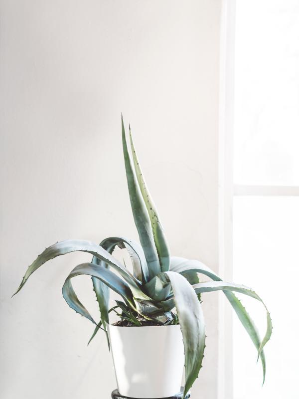Die richtige Zimmerpflanze für das Schlafzimmer | Pflanzenfreude