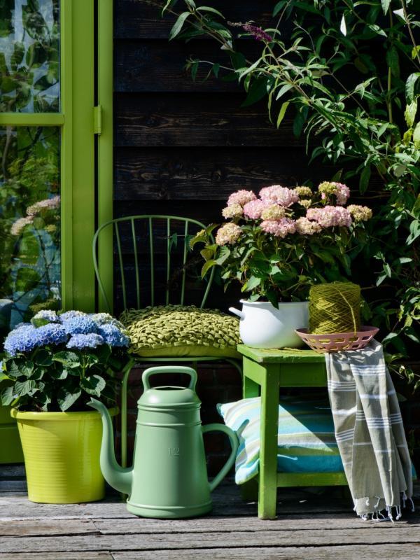Vintage-Traum mit Hortensien - Pflanzenfreude.de