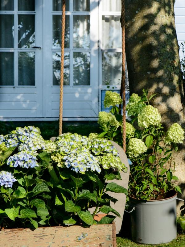 Hortensie in Wannen und Holzkisten verbreiten ländlichen Charme im Garten - Pflanzenfreude.de