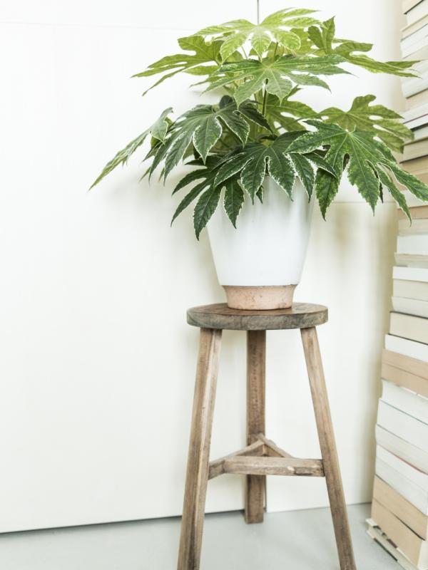 Der richtige Pflanzentopf ist nicht zu groß und nicht zu klein - Pflanzenfreude.de