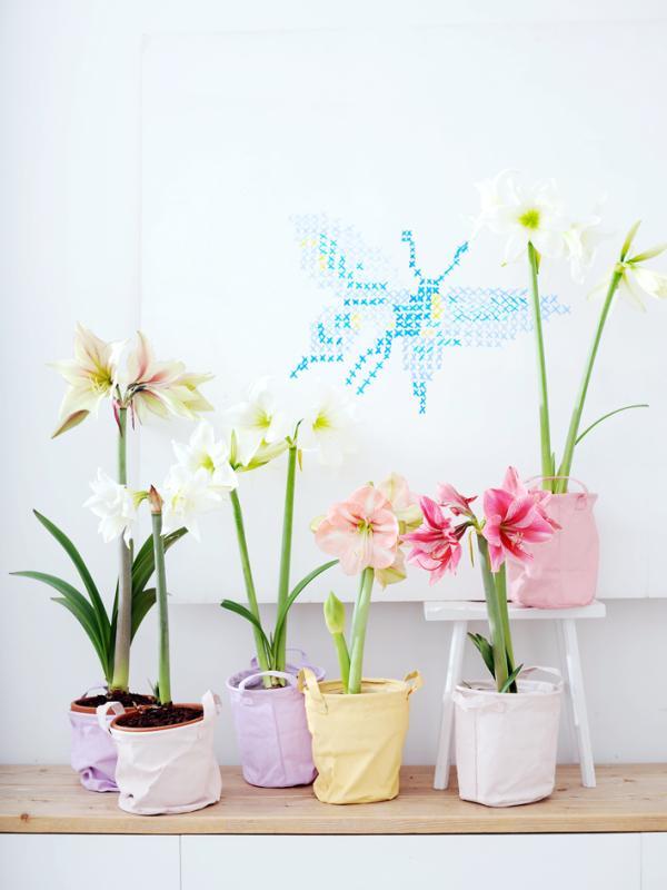 Zwiebeln Als Zimmerpflanzen Pflanzenfreude