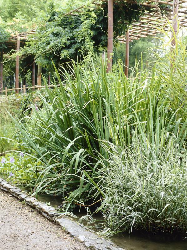 Bambus Pflanzenfreude.de