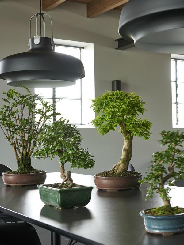 Bonsai Pflanzenfreude.de
