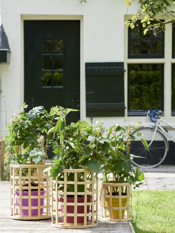 Brombeere Pflanzenfreude.de