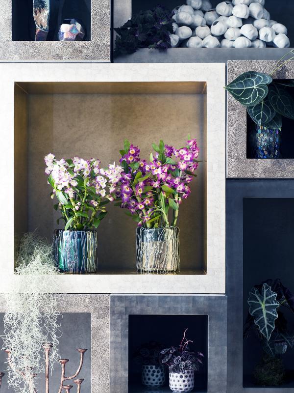 Dendrobium – Pflanzenfreude.de