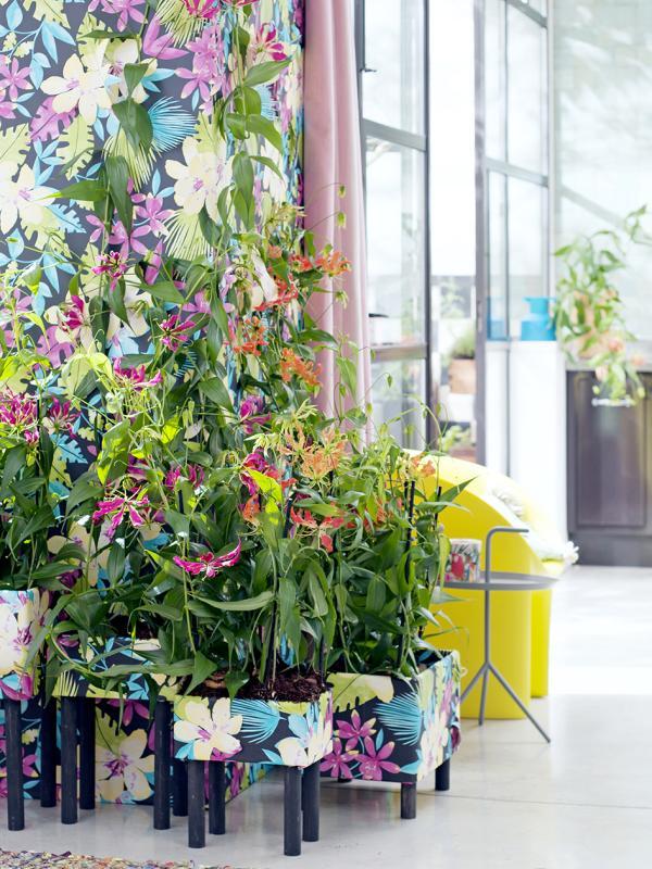 Gloriosa Pflanzenfreude.de