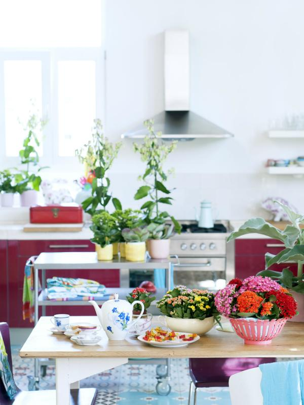 Kalanchoe – Pflanzenfreude.de