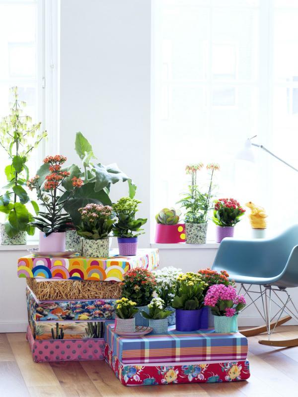 Diese Zimmerpflanze Bluht Den Ganzen Sommer Pflanzenfreude