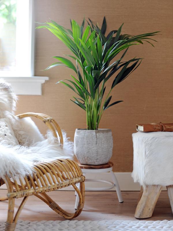 Die bekanntesten Pflanzen aus Australien für Zuhause - Pflanzenfreude.de