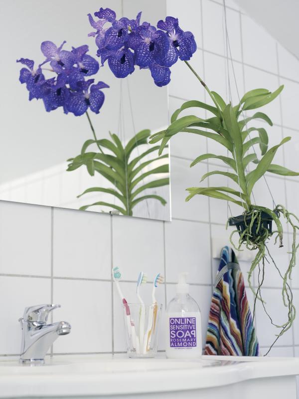 Die Orchidee Ist Die Ideale Pflanze Für Helle Badezimmer
