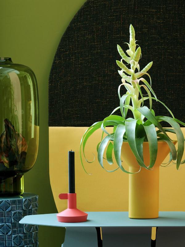 Tillandsia – Pflanzenfreude.de