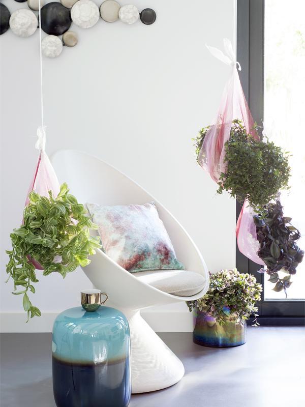 Dreimasterblume – Pflanzenfreude.de