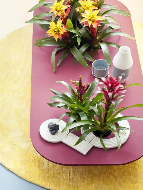 Vriesea – Pflanzenfreude.de