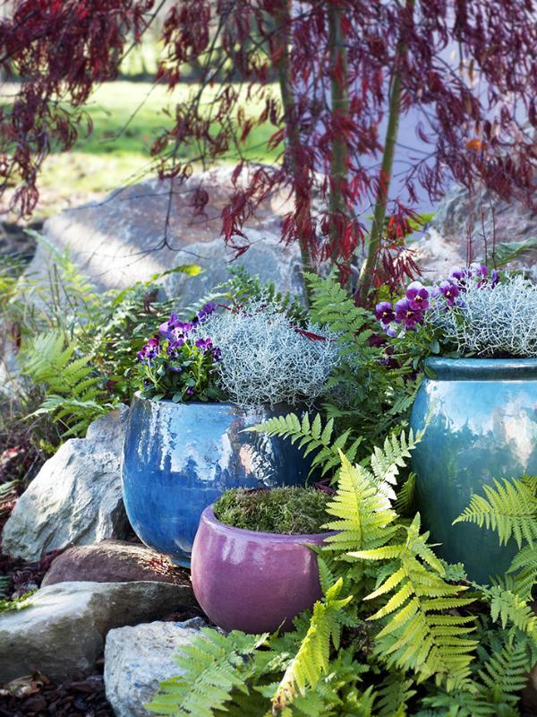 Silberkörbchen Pflanzenfreude.de