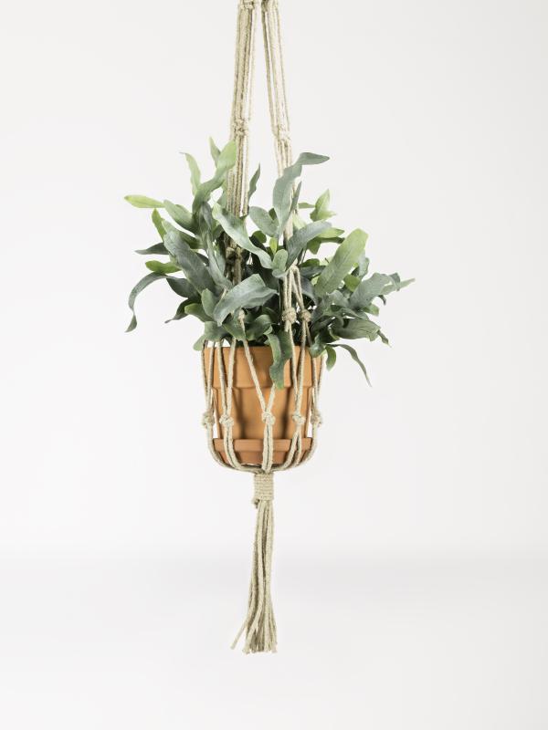 Warum jeder luftreinigende Pflanzen haben sollte ...