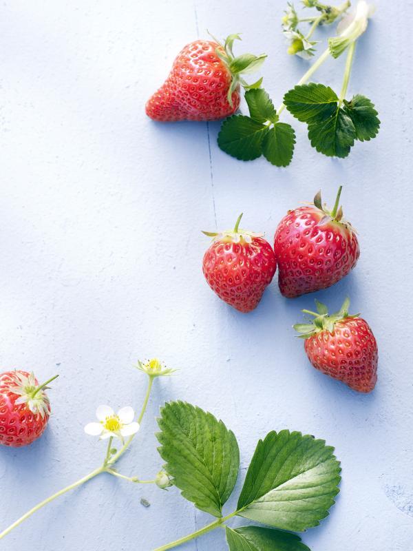 DIY: Hausgemachte, zuckerfreie Erdbeermarmelade - Pflanzenfreude.de